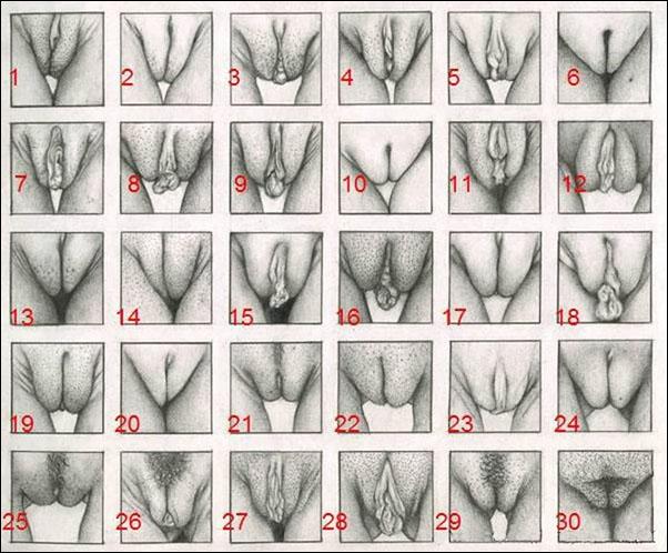 Фото виды женских влагалищ 68695 фотография